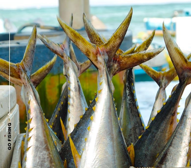 6 Pack Fishing Boat Rentals Charters Bongos Sportfishing